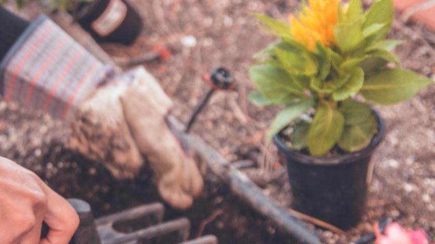 gardening-1_2560x1440_acf_cropped