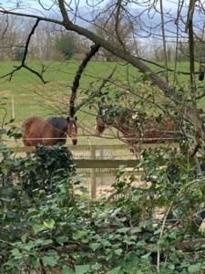 Horses on Chalk Lane